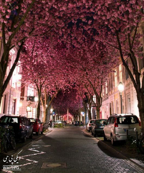 خیابان-چری-بلوزوم-در-آلمان