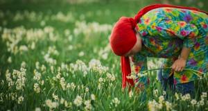 بهار با طعم نرگس /+گزارش تصویری از نرگسزار بهبهان