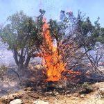 عامل حریق جنگلهای پاسارگاد شناسایی شد